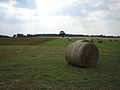 "Baled hay near ""Conservation Walk"" - geograph.org.uk - 523251.jpg"