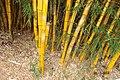 Bambuzal - panoramio (1).jpg