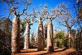 Baobabs, Madagascar (20949803280).jpg