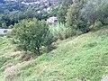 Barga, Province of Lucca, Italy - panoramio - jim walton (53).jpg