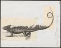 Basiliscus mitratus - 1700-1880 - Print - Iconographia Zoologica - Special Collections University of Amsterdam - UBA01 IZ12800039.tif