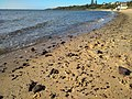 Beach at Mornington.jpg