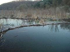 Beaver Dam on Weister Creek, WI.jpg