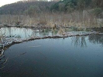 Kickapoo River - Beaver pond on Kickapoo River watershed, 2010