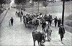 Réfugiés belges. Pour le Royaume-Uni, la réinstallation de la Belgique dans ses droits est un but de guerre.