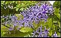 Belligen Flowers-1and (3152067430).jpg