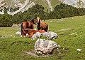 Bergtocht van S-charl naar Alp Sesvenna. 10-09-2019. (actm.) 13.jpg