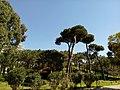 Beyrouth bois des pins.jpg