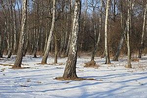Birchwood Slavnoe 2012 G1.jpg