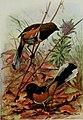 Bird-lore (1915) (14732331866).jpg