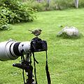 Bird Photographer.jpg