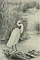 Bird notes and news (1912) (14746313264).jpg