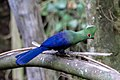Birds of Eden-1471.jpg