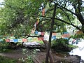 Black Dragon Pool prayer flags.JPG