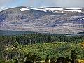 Blackmuir Wood - panoramio (6).jpg