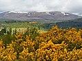 Blackmuir Wood - panoramio (8).jpg
