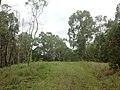 Bli Bli QLD 4560, Australia - panoramio (2).jpg
