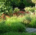 Blumen im Herzogenriedpark - panoramio.jpg