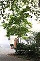 Blutgasse und Seitenhöfe Wien 20091006 007.JPG