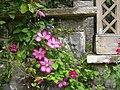 Bodnant Gardens, Close Up - geograph.org.uk - 1092627.jpg