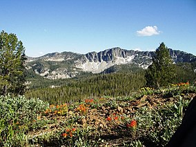 A photo of mountains and Indian paintbrush (Castilleja sp.) in Boise National Forest