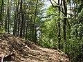 Bosco sul monte Camurcina - panoramio (1).jpg
