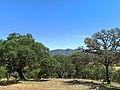 Bosque de encinos en Dolores Hidalgo, Guanajuato, México.jpg