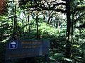 Bosque nuboso Isla del Coco.JPG