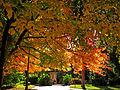Botanička bašta Jevremovac, Beograd - jesenje boje, svetlost i senke 25.jpg