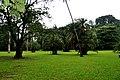 Botanic garden limbe129.jpg