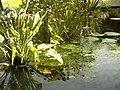 Botanischer Garten Freiburg - Botany Photography - panoramio (21).jpg