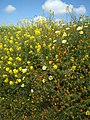 Bouachouch forest. Ait mimoun. Khemisset 21.jpg