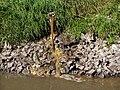 Boye Direkteinleitung von verschmutztem Wasser.jpg
