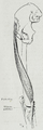 Braus 1921 280.png