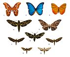 Brazilians butterfly collection, Zoology Museum, University of São Paulo.jpg