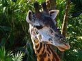 Brevard Zoo - Flickr - Rusty Clark (85).jpg