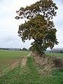 Bridleway and tree - geograph.org.uk - 1565462.jpg