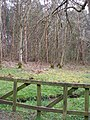 Brierley Wood - geograph.org.uk - 408101.jpg