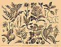 Brockhaus and Efron Encyclopedic Dictionary b35 145-0.jpg