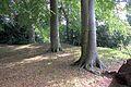 Bryn y Beili, yr Wyddgrug; Bailey Hill, Mold, Sir y Fflint, North Wales 09.jpg