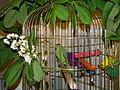 Bucuresti, Romania. Sasa (papagalul Micul Alexandru) in jungla Bucurestiului (1).JPG