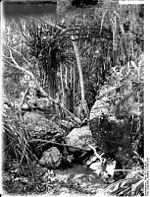 Ulugurugebirge   dans l Est africain en 1906