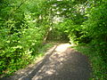 Butchers Wood, Hassocks.JPG