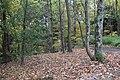 Buttermilk Falls - panoramio (4).jpg