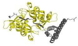 Chromobox Homolog 1