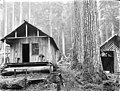 Cabin and shed in woods, unidentified location, ca 1911 (PICKETT 53).jpeg