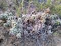 Cacti in NM 3.jpg
