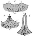 Cambridge Natural History Mammalia Fig 004.png