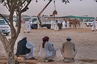 Al Rayyan - Men watch a camel being lifted by crane in the Abu Hamour Wholesale Market.