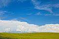 Canola Sky (6058458867).jpg